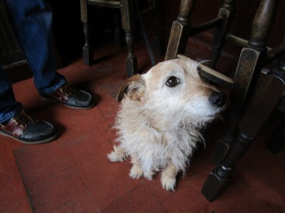 A22 dog walk and dog-friendly village pub, East Sussex - Driving with Dogs