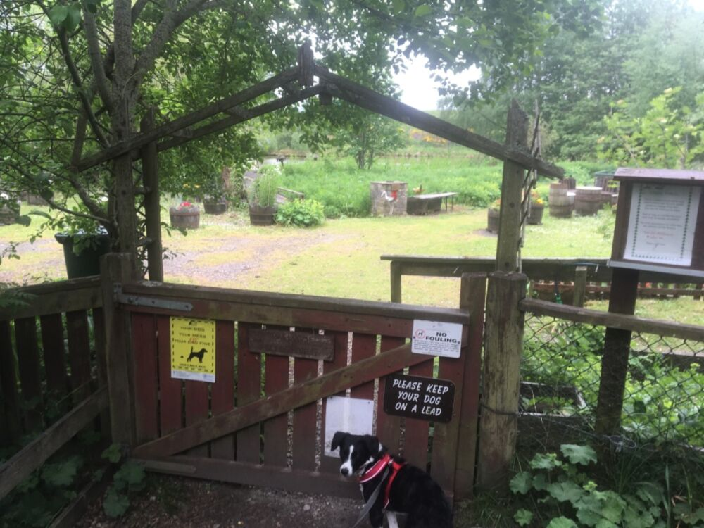 Glebe Nature Reserve, Scotland - 3A469D02-E399-4193-9368-5DA65AE053A6.jpeg