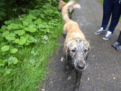 A68 Accessible old railway dog walk, County Durham - Driving with Dogs