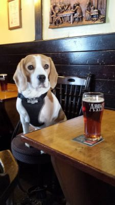 Real ale pub near Southend airport, Essex - Driving with Dogs