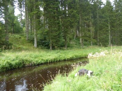 Riverside Picnic Site and Woodland dog walk near Wark, Northumberland - Driving with Dogs