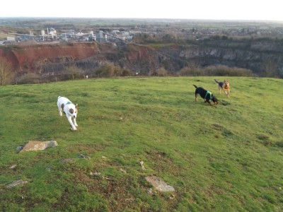Interesting dog walk at Croft Quarry Nature Reserve, Leicestershire - Driving with Dogs