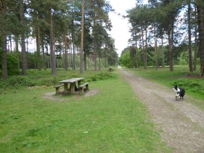 Woodland dog walk near Woodhall Spa, Lincolnshire - Driving with Dogs