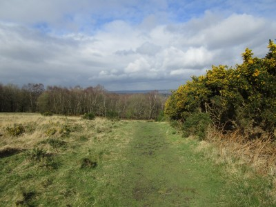 A22 forest dog walks, East Sussex - Driving with Dogs
