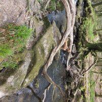 Golitha Falls National Nature Reserve, Cornwall - 20210427_160240.jpg