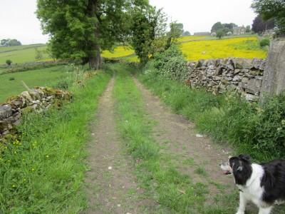 Eyam dog-friendly pub and dog walk, Derbyshire - Driving with Dogs