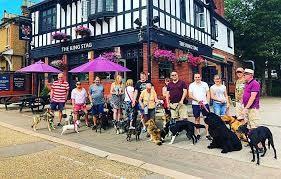 Bushey dog-friendly pub, Hertfordshire - dog-friendly pub Bushey.jpg
