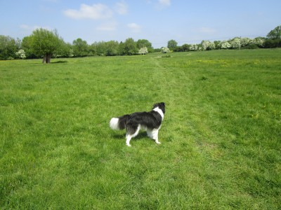 A424 dog walk and pub near Stow, Oxfordshire - Driving with Dogs