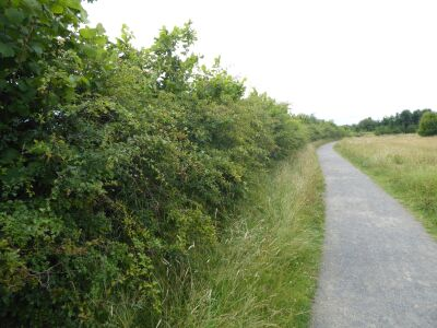Nature Meadows dog walk near Houghton le Spring, Tyne & Wear - Driving with Dogs