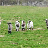 Colney Heath dog walk with optional extension to take in farm animals, Hertfordshire - IMG_20190407_101430.jpg