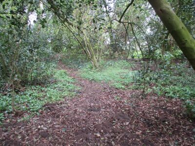 A woodland wander with the dog near Pulham Market, Norfolk - Driving with Dogs
