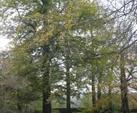 Calke Abbey, Derbyshire - Dog walks in Derbyshire
