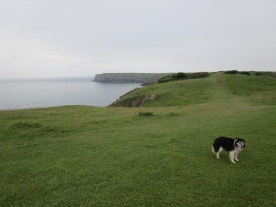 Pembrokeshire dog-friendly beach, cafe and dog walk, Wales - Driving with Dogs