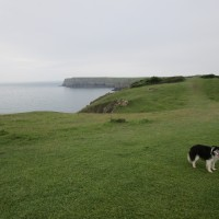 Pembrokeshire dog-friendly beach, cafe and dog walk, Wales - Wales dog-friendly beach and dog walk