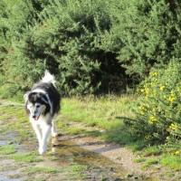 A35 Forest dog walk, Dorset - IMG_0041.JPG