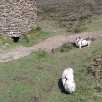 Wheal Coates, Cornwall - 20190420_140401.jpg