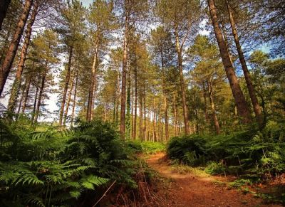 Forest dog walk near Bournemouth, Dorset - Driving with Dogs