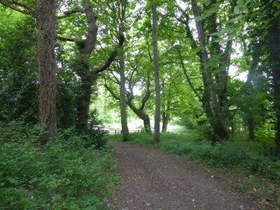 Quiet woodland dog walk, North Yorkshire - Driving with Dogs