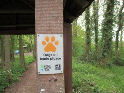 Woodland dog walk near Felsham, Suffolk - Driving with Dogs
