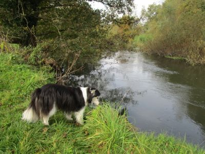 A4 Dog walk and dog-friendly inn, Berkshire - Driving with Dogs