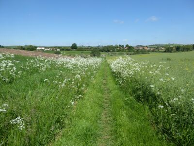 Country pub and dog walk in the Wolds, Lincolnshire - Driving with Dogs