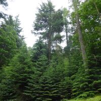 Forest dog walk and cafe near Durham, County Durham - Dog walks with a cafe in County Durham