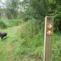 Riverside Picnic Site and Woodland dog walk near Wark, Northumberland - Dog walks in Northumberland