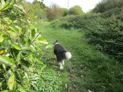M4 dog-friendly pub and dog walk near Reading, Berkshire - Driving with Dogs
