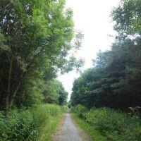 Deerness Valley dog walk, County Durham - P1020455.JPG