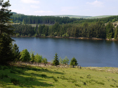 Lakeside dog walk near Llanidloes, Wales - Driving with Dogs