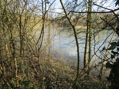 A24 Country Park dog walk near Horsham, West Sussex - Driving with Dogs