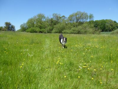 Wolds village circular dog walk, Lincolnshire - Driving with Dogs