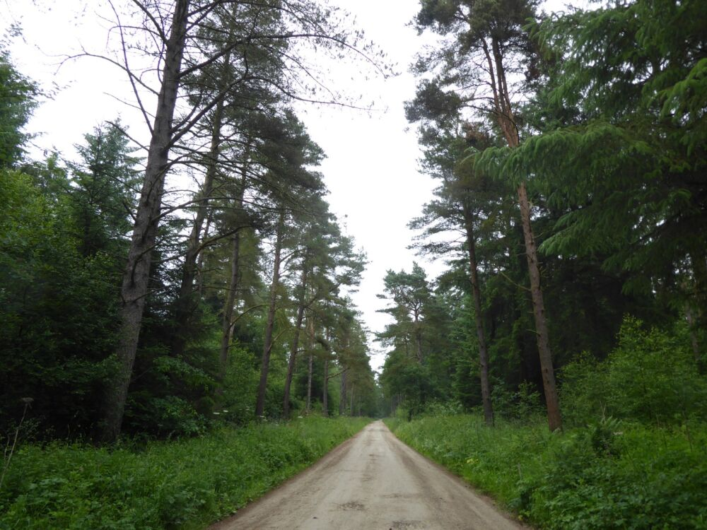 A170 Accessible forest dog walk, North Yorkshire - North Yorkshire dog walks