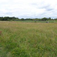 Nature Meadows dog walk near Houghton le Spring, Tyne & Wear - P1020709.JPG