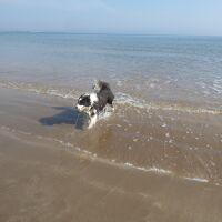 Embleton dog-friendly beach, Northumberland - Northumberland dog-friendly beach and dog walk