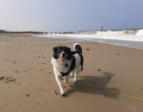 Eccles dog-friendly beach and cafe, Norfolk - 6FC06D32-5799-4328-856C-1F9E22942F4C.jpeg