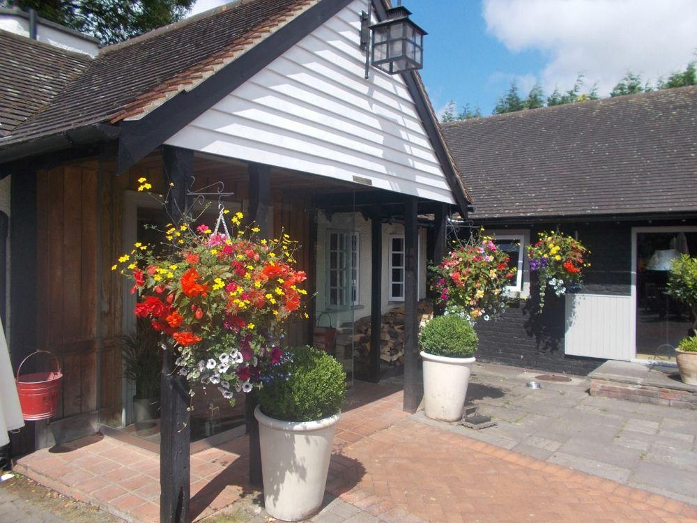Ancient forest dog walk and dog-friendly pub near Chigwell, Essex - Essex dog-friendly pub and dog walk