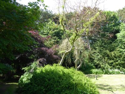 Historic woodland and beach near Bridlington, East Yorkshire - Driving with Dogs