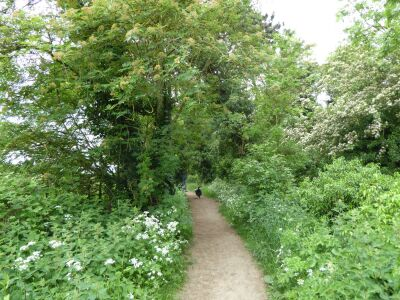 A gentle dog walk by the River Slea, Lincolnshire - Driving with Dogs