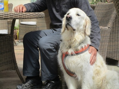 A458 dog-friendly refreshments, Wales - Driving with Dogs