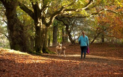 A39 forest dog walk near Truro, Cornwall - Driving with Dogs