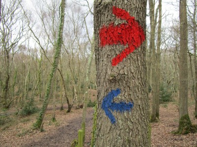 Woodland dog walks near Bexhill, East Sussex - Driving with Dogs