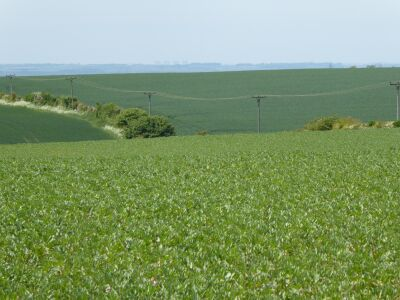 Wonderful dog walk and foodie pub in the Wolds, Lincolnshire - Driving with Dogs