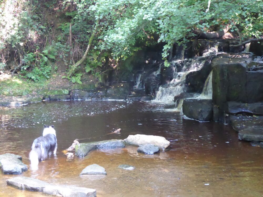 Waterfalls dog walk and dog-friendly pubs, Northumberland - P1030655.JPG