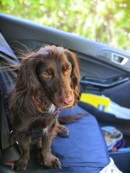 Rowan-Driving with Dogs.jpeg