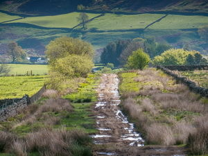 A689 Heritage Railway and a dog walk on the Pennine Way, Northumberland - Driving with Dogs