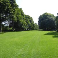 A69 Riverside dog walk and country park by Hexham, Northumberland - Northumberland dog walking places.jpg
