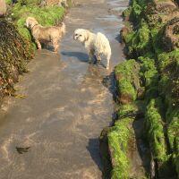 Widemouth dog-friendly beach and dog walk, Cornwall - 774D90D1-1A4C-4CF6-804E-F9FEEDC46855.jpeg