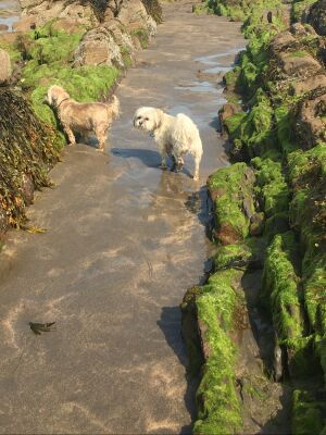 Widemouth dog-friendly beach and dog walk, Cornwall - Driving with Dogs