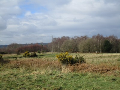 A22 forest dog walk, East Sussex - Driving with Dogs